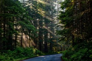 Wald Nachhaltigkeit Nachhaltig Holz PEFC