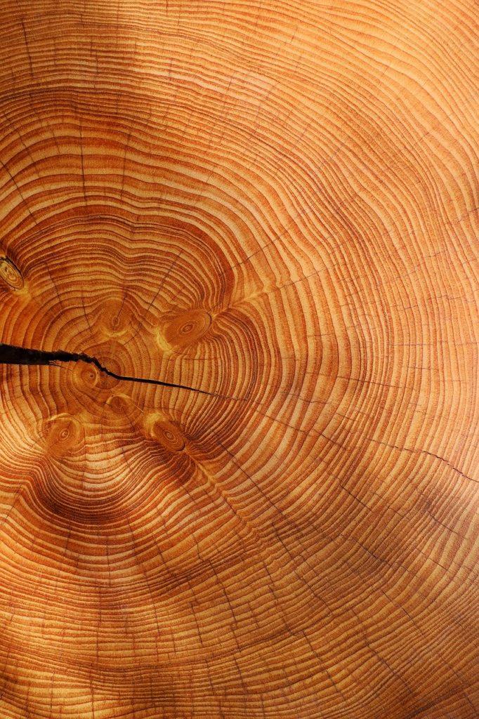 Holz Nachhaltigkeit Nachhaltig